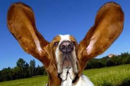 About-Dog-Ear-Infections
