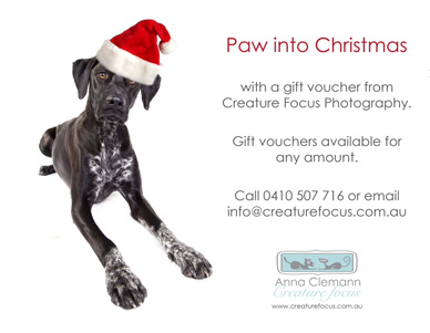 CREATURE-FOCUS-PHOTOGRAPHY