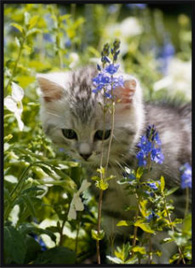 Cat-in-the-garden-image