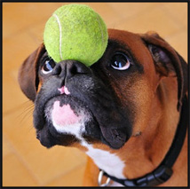 Dog-and-Ball-NL