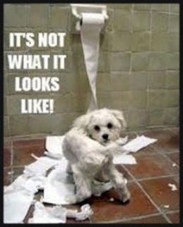 Dog-with-Toilet-Paper